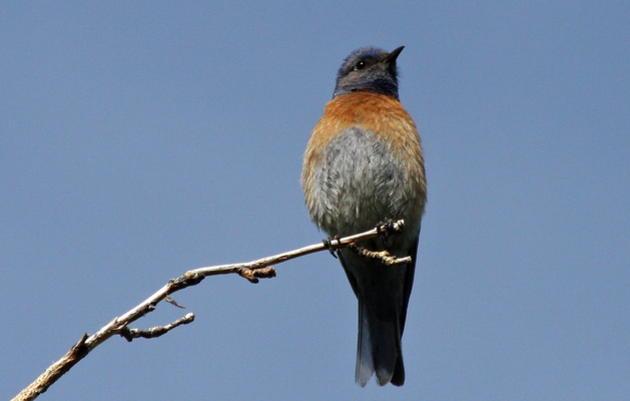 Birds of the Randall Davey Audubon Center & Sanctuary