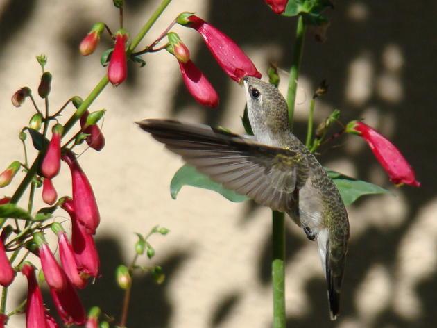 Native Plants for Birds