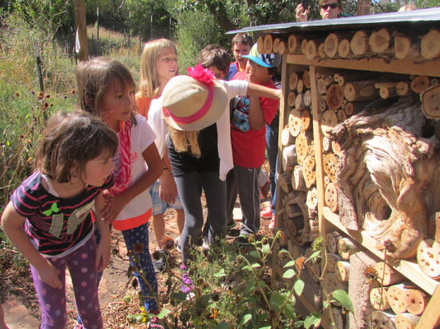 Camp Programs at the Randall Davey Audubon Center & Sanctuary